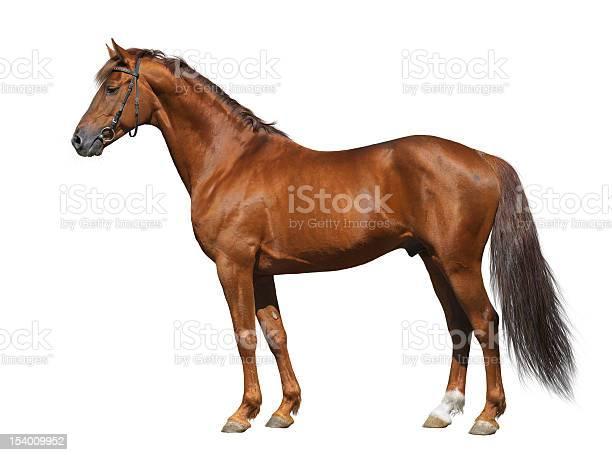 Sorrel don stallion picture id154009952?b=1&k=6&m=154009952&s=612x612&h=n cnnfxblcbmy7gmxhpbhbndd 2t1is76fot45eaoxm=
