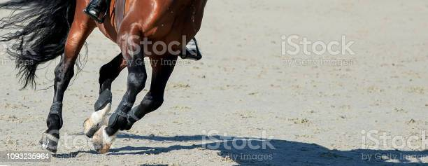 Sorrel dressage horse and rider in uniform performing jump at show picture id1093235964?b=1&k=6&m=1093235964&s=612x612&h=f0euxrccs8kgkcqgidsqfsolruixvj0c7wzs1afuygk=
