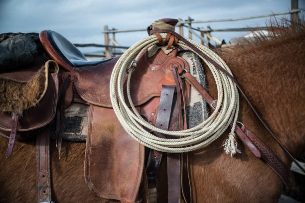 sorrel horse saddled up and ready to ride - rodeo stock pictures, royalty-free photos & images