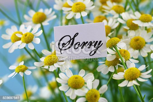 istock Sorry card with chamomile flowers on blue background 523697541