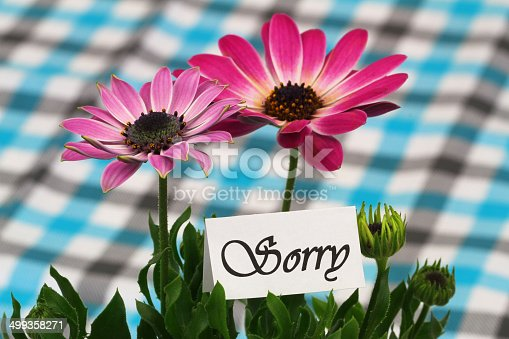 istock Sorry card with pink gerbera daisies 499358271