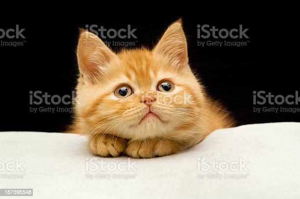 Sort hair cat picture id157395548?b=1&k=6&m=157395548&s=612x612&h=vtfm9fvsugvwflgwrcbqkn8f9f2npetntw368c9rbkk=