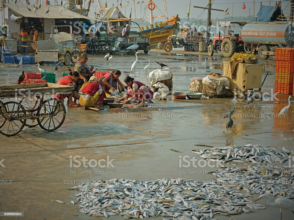 Sorting the catch stock photo