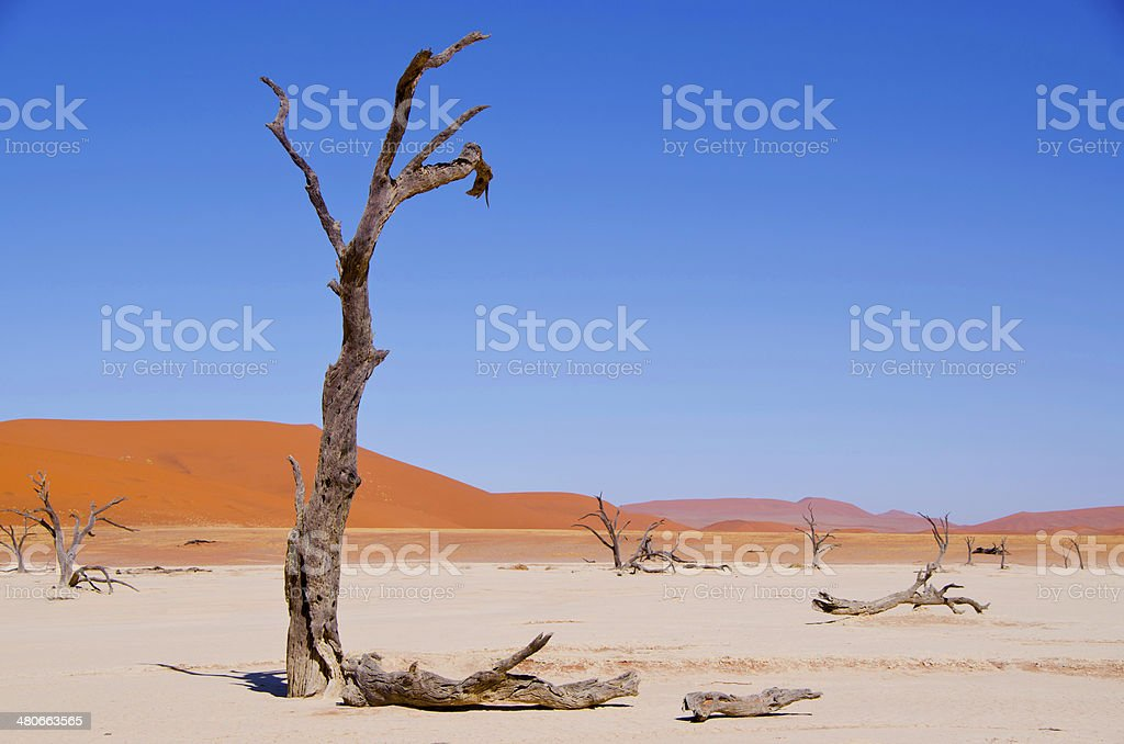 Sossusvlei - Namibia stock photo