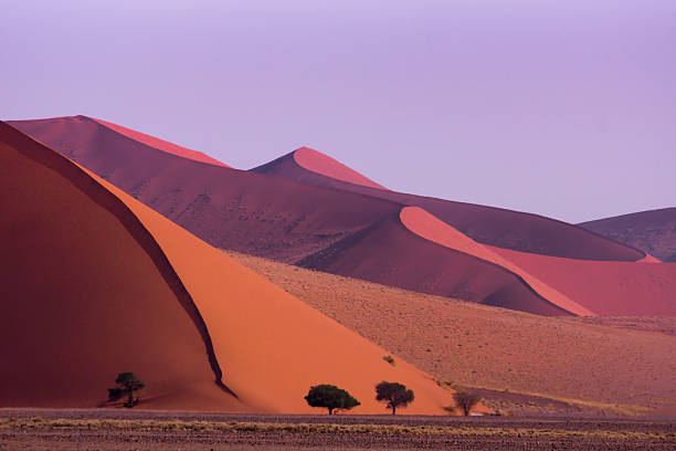 Sossusvlei, Namibia Sossusvlei sand dunes with trees to provide a sense of sale. Taken in landscape format. namibia stock pictures, royalty-free photos & images