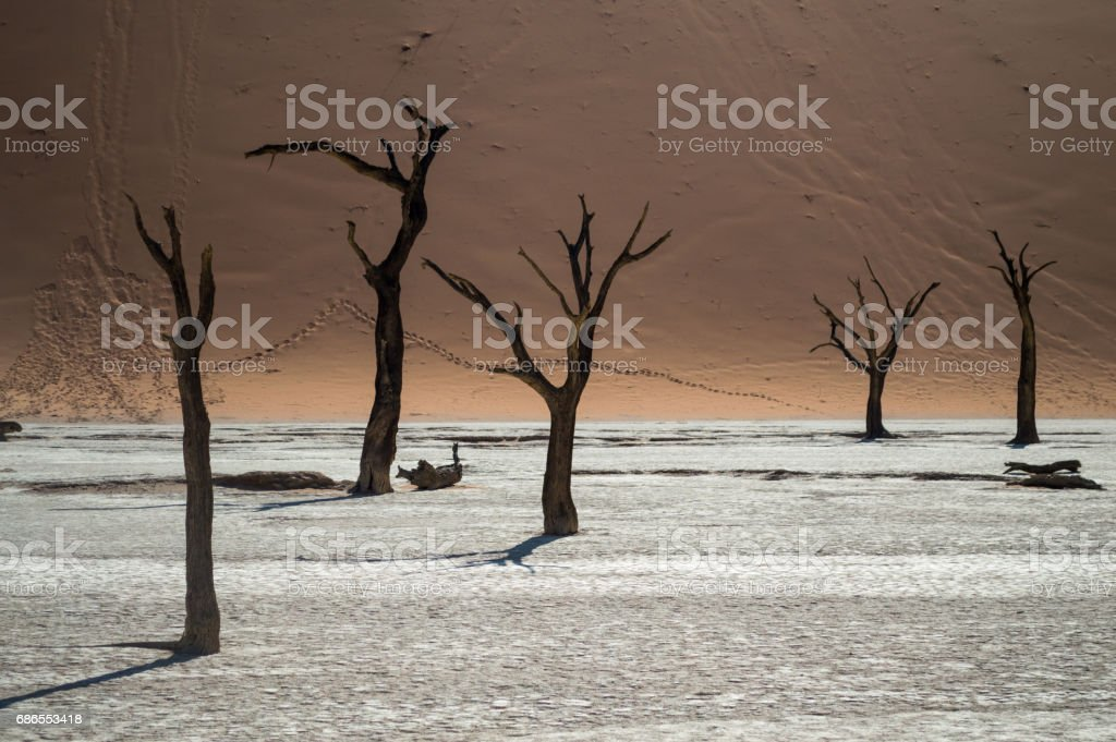 Sossusvlei Salt Pan Desert Landscape with Dead Trees and Dunes, Namibia foto stock royalty-free