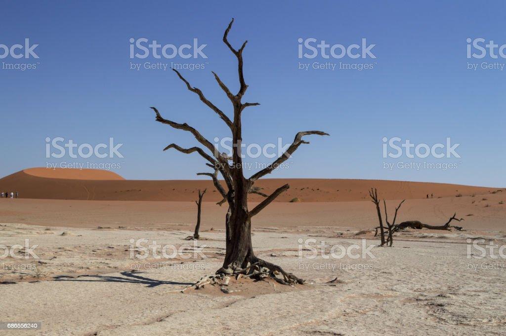 Sossusvlei Salt Pan Desert Landscape with Dead Trees, Dunes, People, Namibia royaltyfri bildbanksbilder