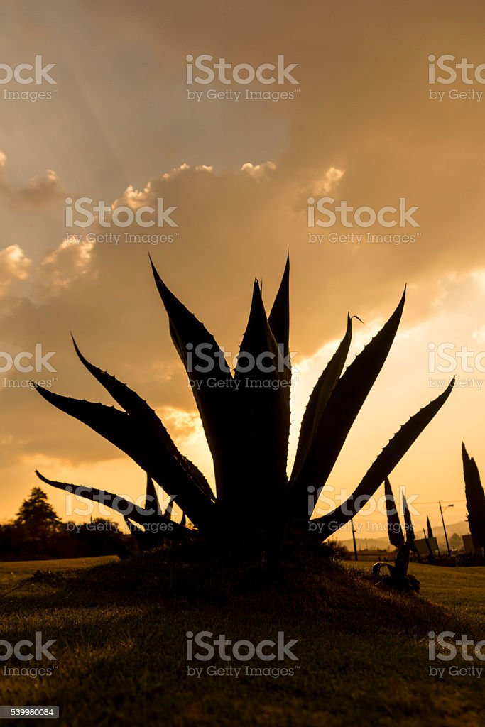 Soul of Mexico stock photo