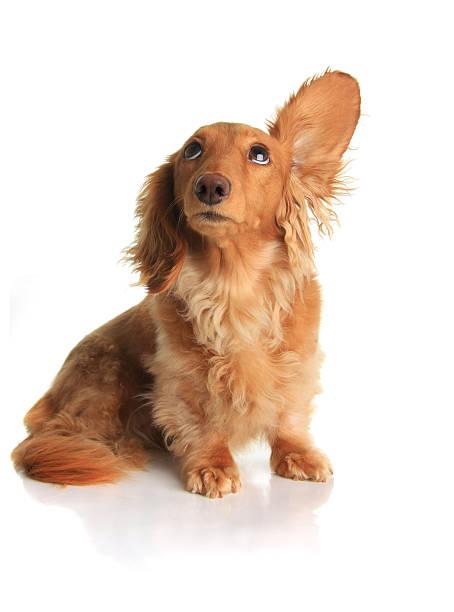 Sound dog picture id153720342?b=1&k=6&m=153720342&s=612x612&w=0&h=y0nopgqcqazzaqh e7g efzxreaok9z93pjiczzuvv8=