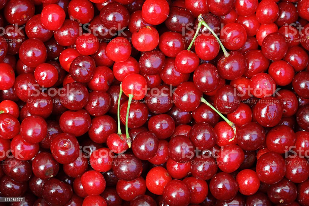 Sour Cherries (Prunus cerasus) stock photo