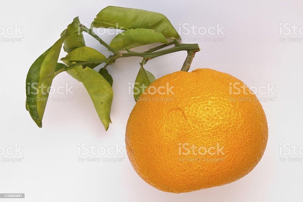 Sour Orange. stock photo