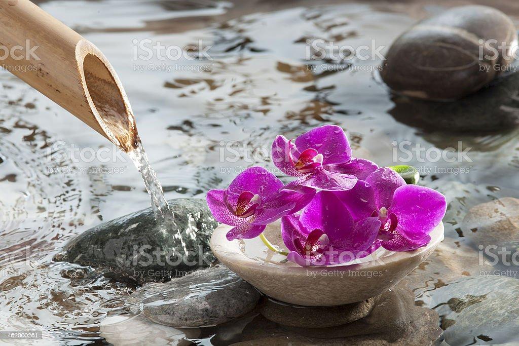 source of water next to zen flowers stock photo