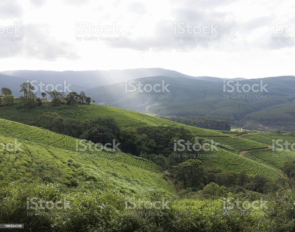 South Africa countryside in Komatiland Forest stock photo