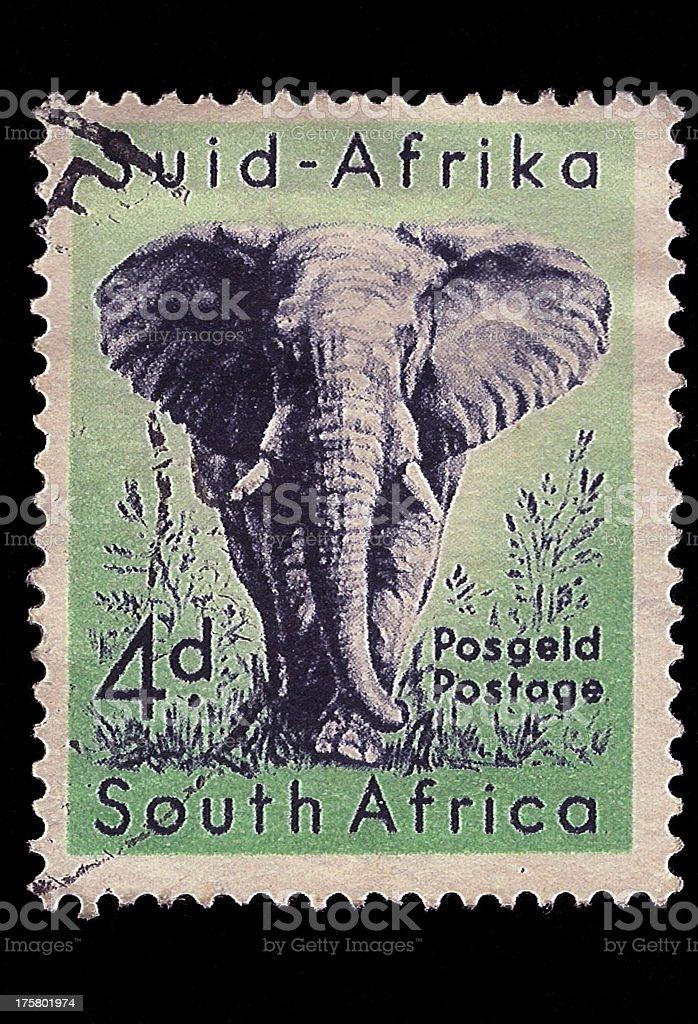Fotografía de Sudáfrica Sello Postal Elefante Africano 1954 y más ...