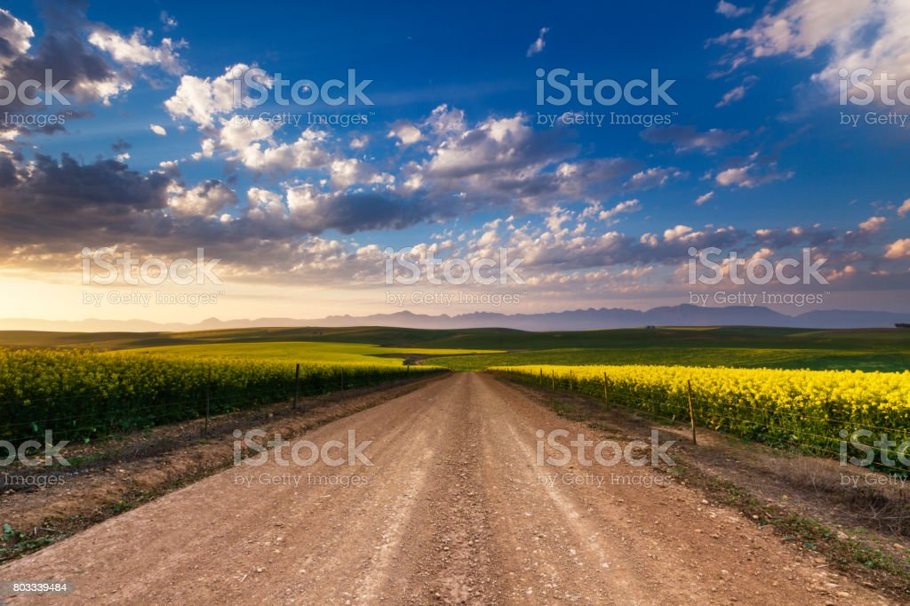 South Africa, Western Cape Province, Overberg, road leading through canola fields under a cloudy sky. stock photo