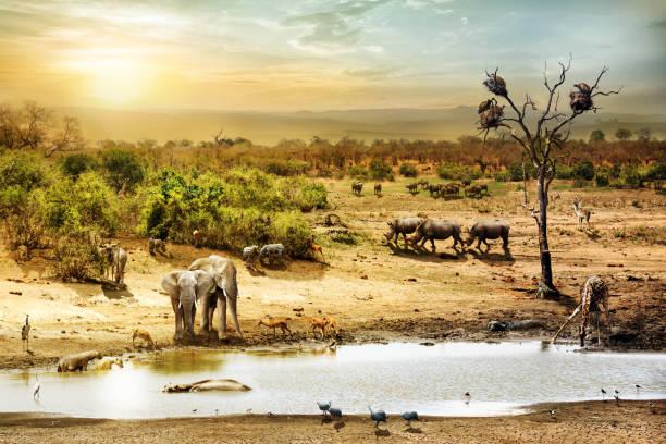 south african safari wildlife fantasy scene - safari tiere stock-fotos und bilder