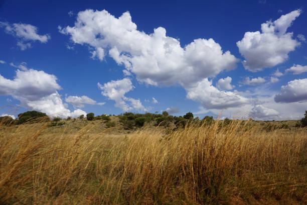 zuid-afrikaanse savanne met blauwe lucht in het zomerseizoen - blesbok stockfoto's en -beelden