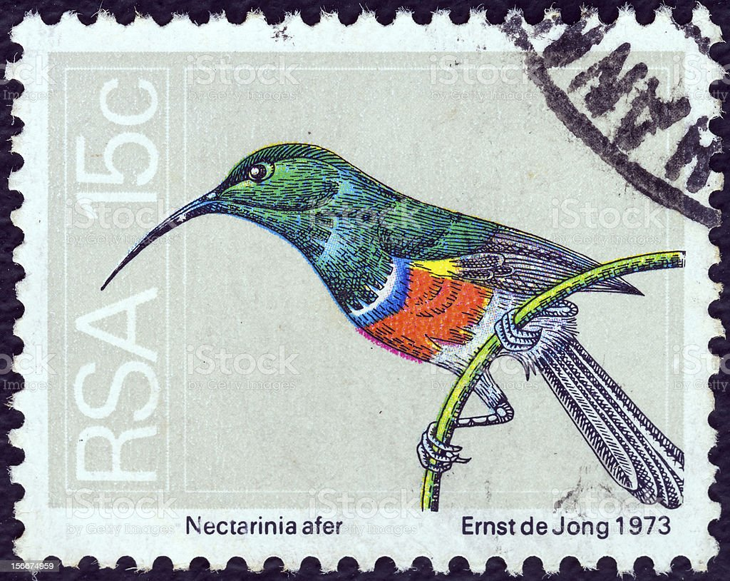 South African stamp shows Greater double-collared sunbird (1974) stock photo