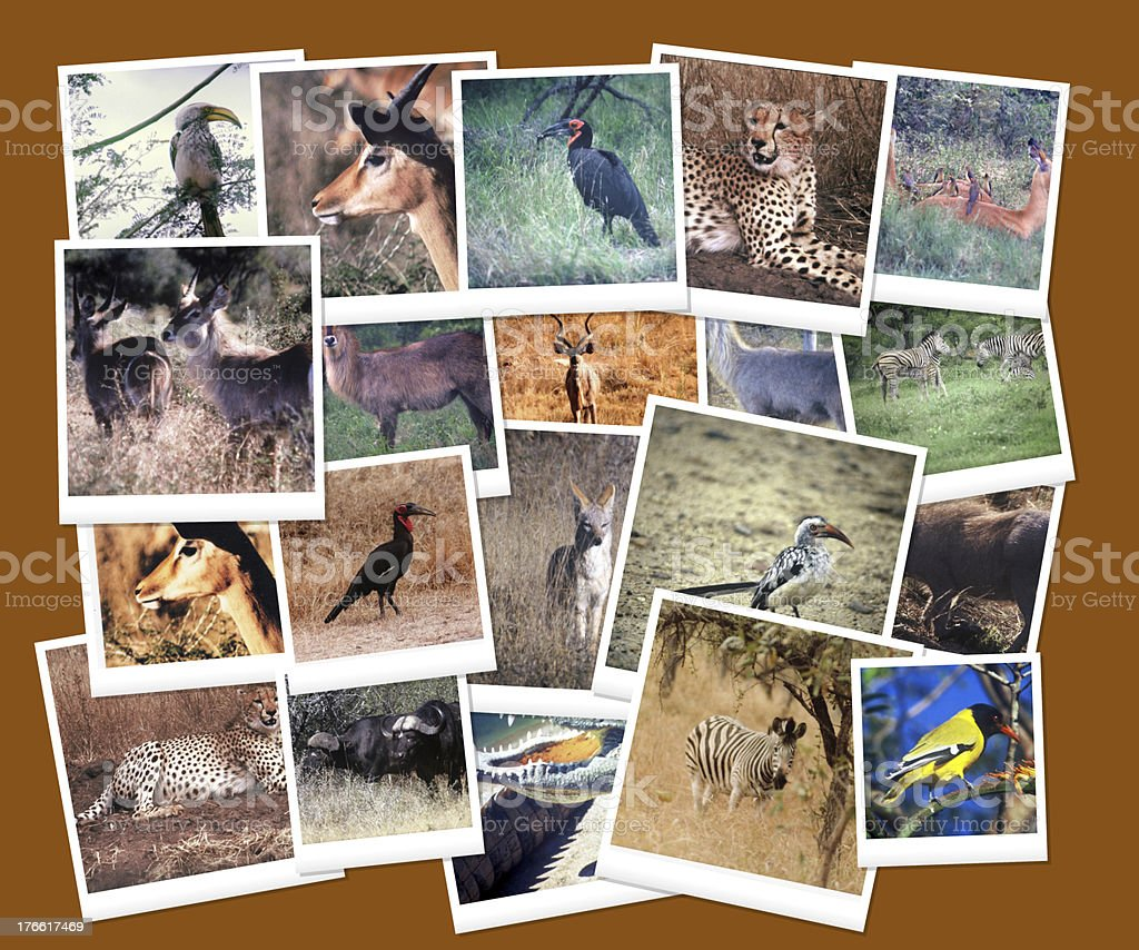 South African Wild Life Collage Royalty Free Stock Photo