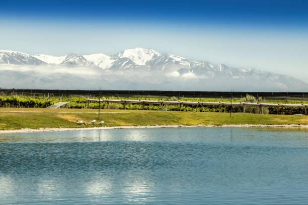South American vineyard, Mendoza, Argentina. stock photo
