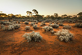 South Australian outback Landscape at sunset