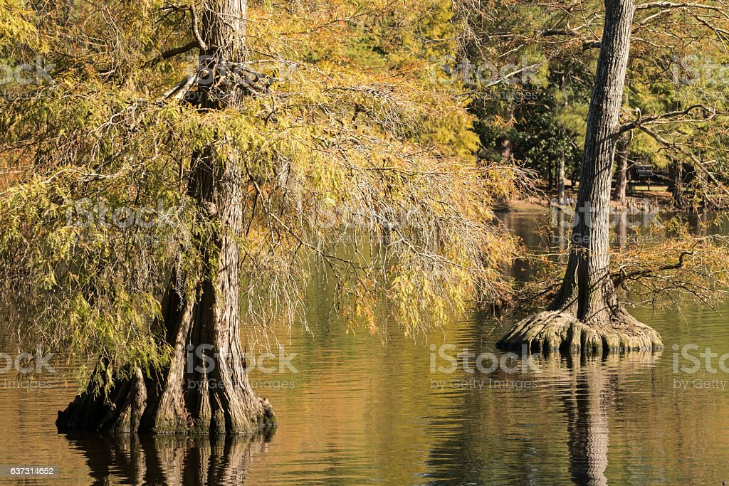 South Carolina swamp stock photo