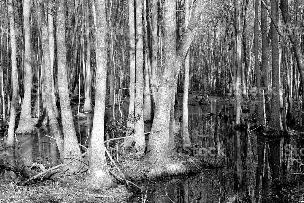 South Carolina Swamp royalty-free stock photo