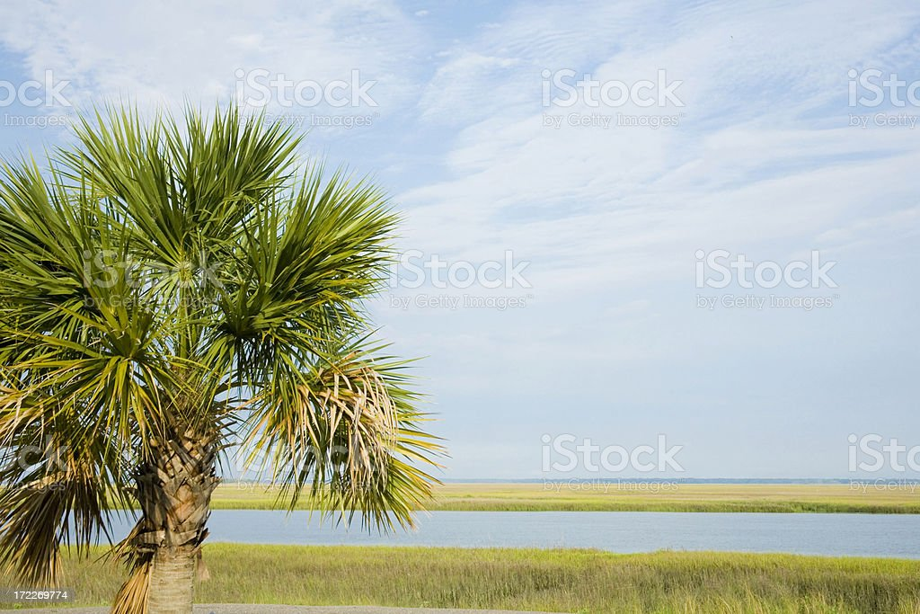 South Carolina, the Palmetto State stock photo