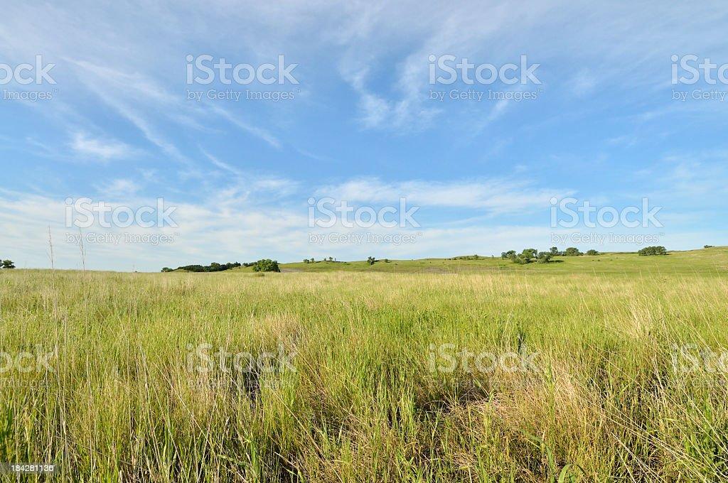 South Dakota Prairie Gammagrass royalty-free stock photo