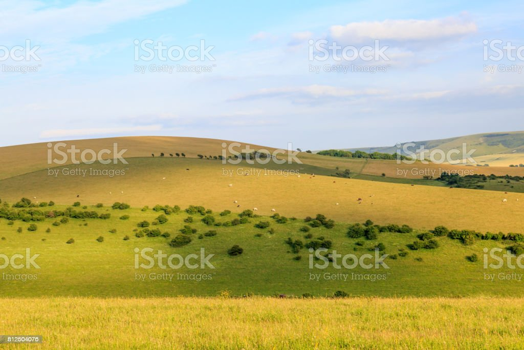 South Downs Landscape stock photo