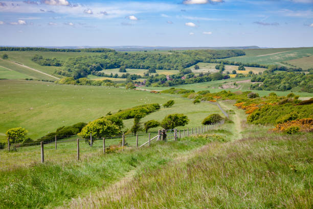 South Downs Way National Trail in Sussex Southern England UK South Downs Way, a  long distance footpath and bridleway along the South Downs hills in Sussex, Southern England, UK southeast england stock pictures, royalty-free photos & images