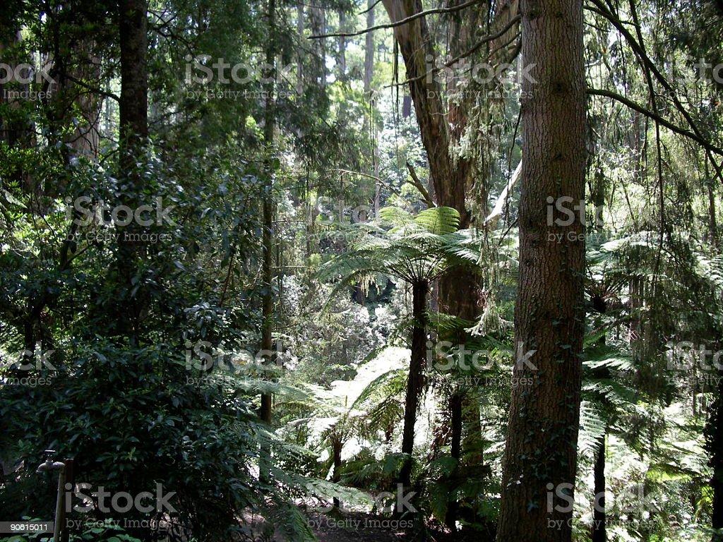 south East Australia Flora royalty-free stock photo