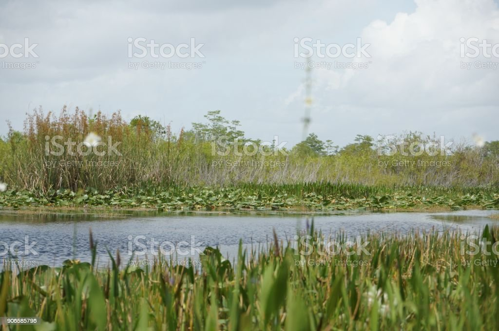 South Florida Swamp river stock photo