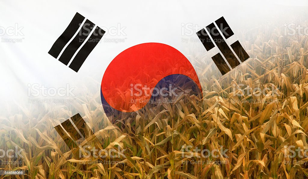 South Korea Nutrition Concept Corn field with fabric Flag stock photo