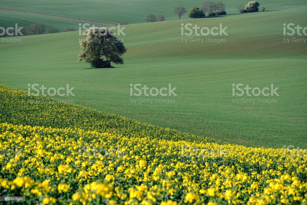 South Moravia landscape and farmland in the spring with rapeseed in the fields. stock photo