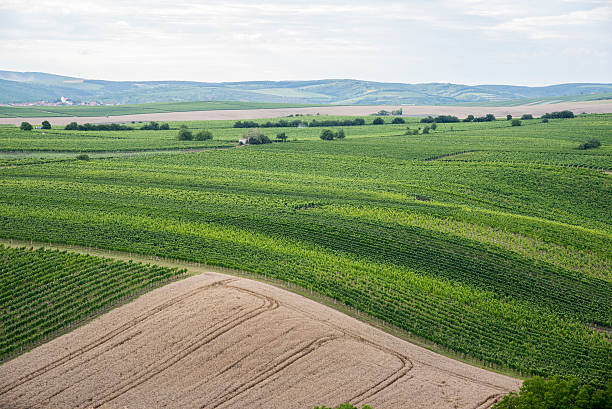 South Moravia Wavy meadows spring landscape in South Moravia, Czech Republic moravia stock pictures, royalty-free photos & images