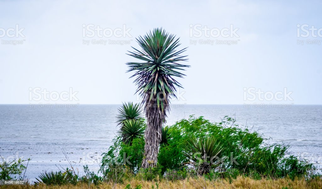 south padre island nature in texas stock photo
