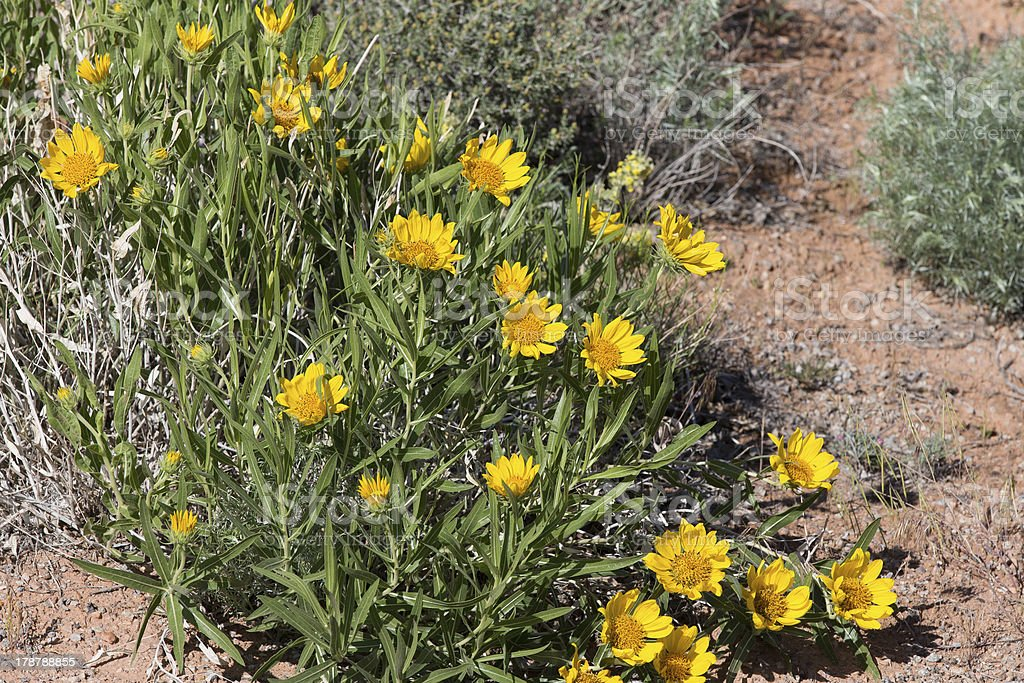 South west desert flowers royalty-free stock photo