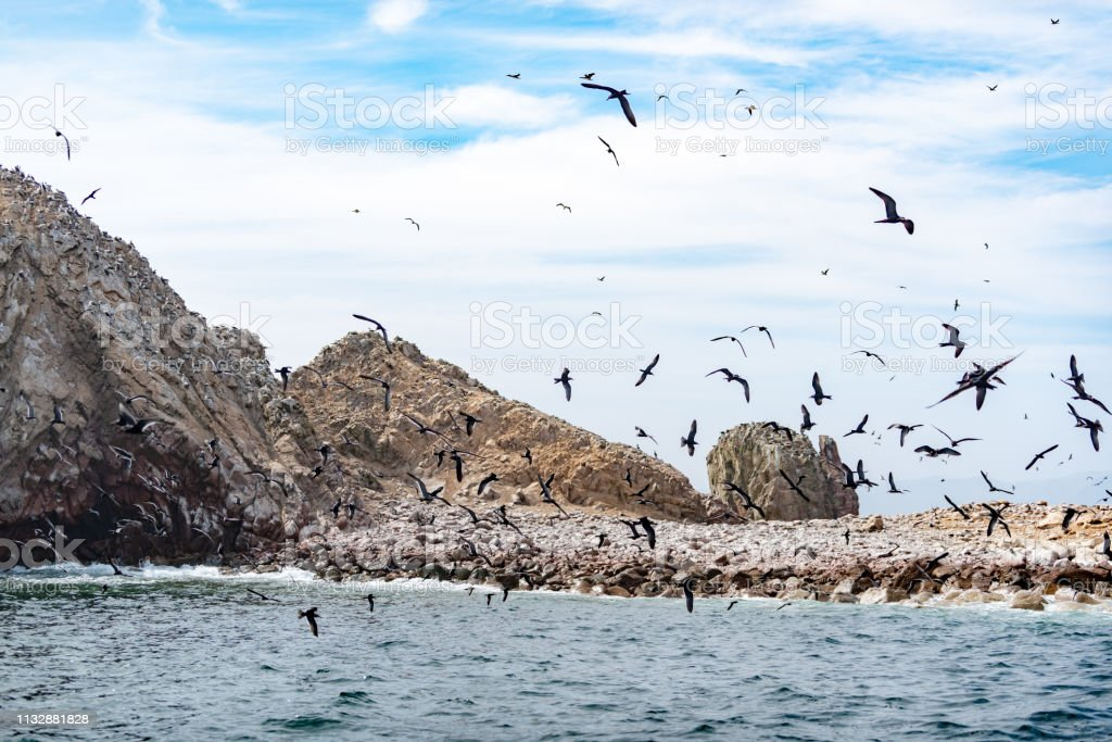 South-American Seabirds in Ballestas Islands National Reserve, Peru stock photo