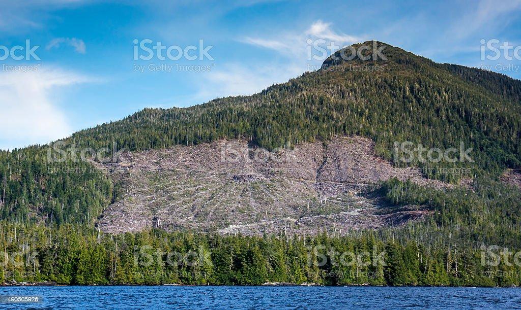 Southeast Alaskan Clearcut stock photo