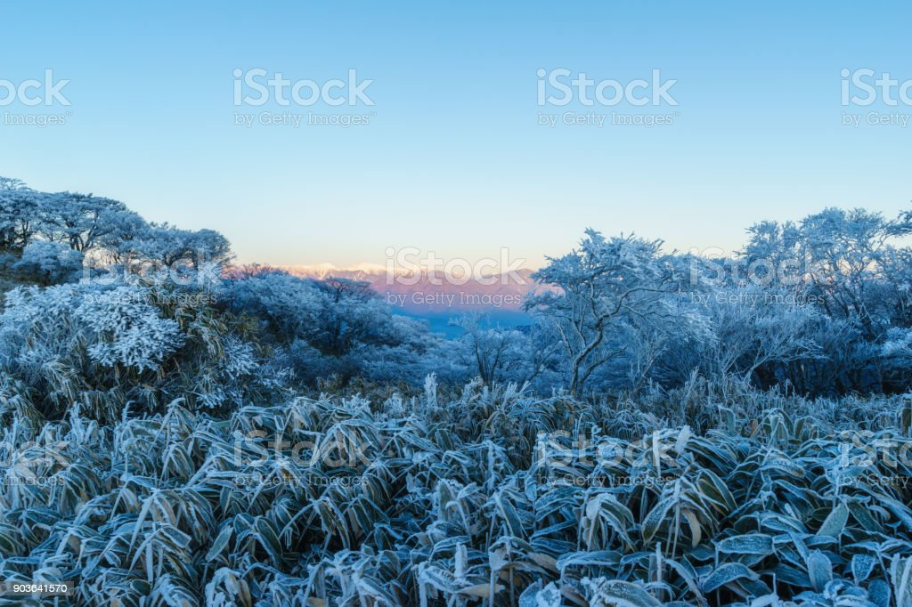 Southern Alps and Frost Trees stock photo