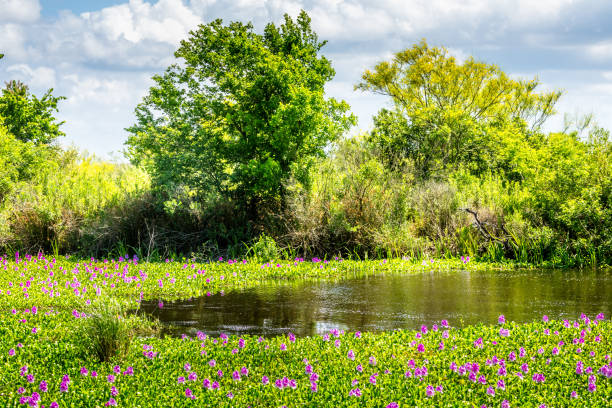 Southern blooming marsh land in the south of Texas stock photo