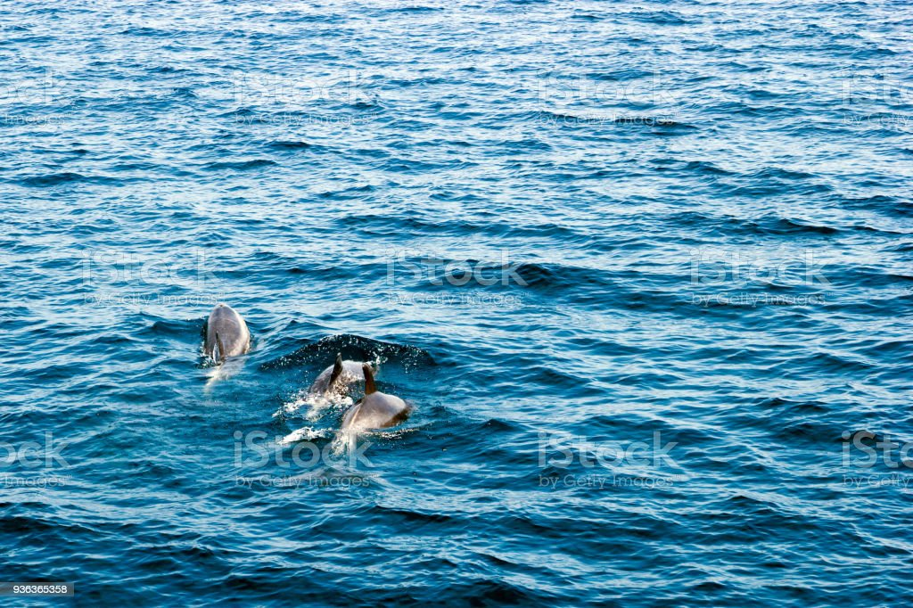 Southern California Dolphins stock photo