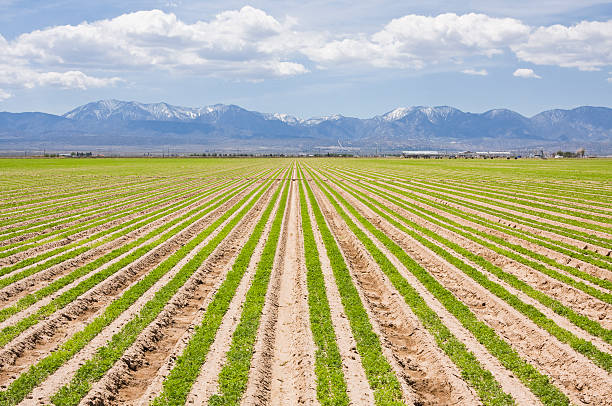 Southern California Farm  mount baldy stock pictures, royalty-free photos & images