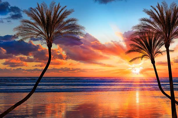 southern california sunset beach with backlit palm trees - vattenlandskap bildbanksfoton och bilder