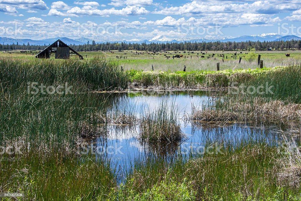 Southern Cascadia ranch land stock photo