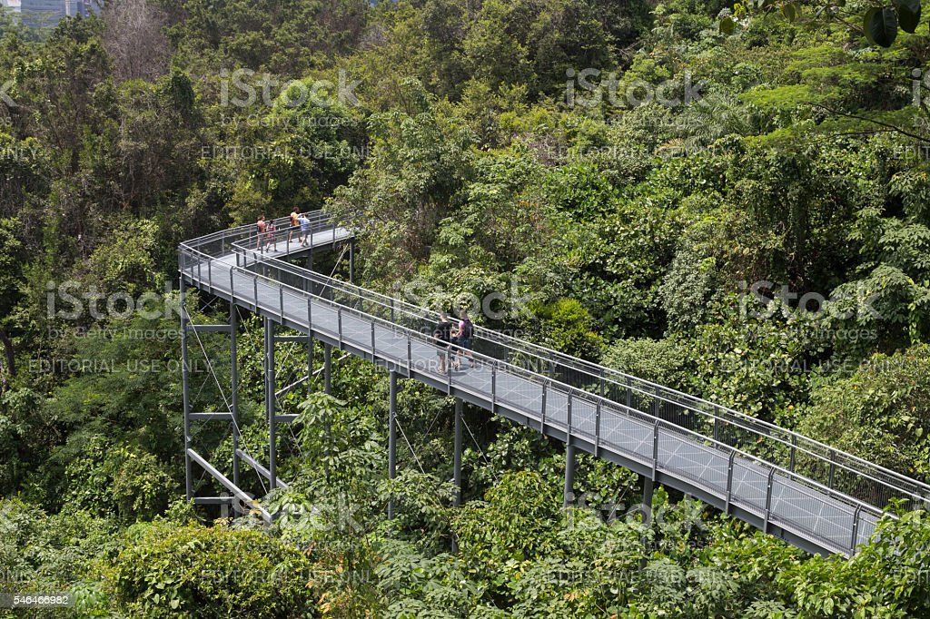 Southern Ridges Canopy Walk Singapore royalty-free stock photo & Southern Ridges Canopy Walk Singapore Stock Photo u0026 More Pictures ...