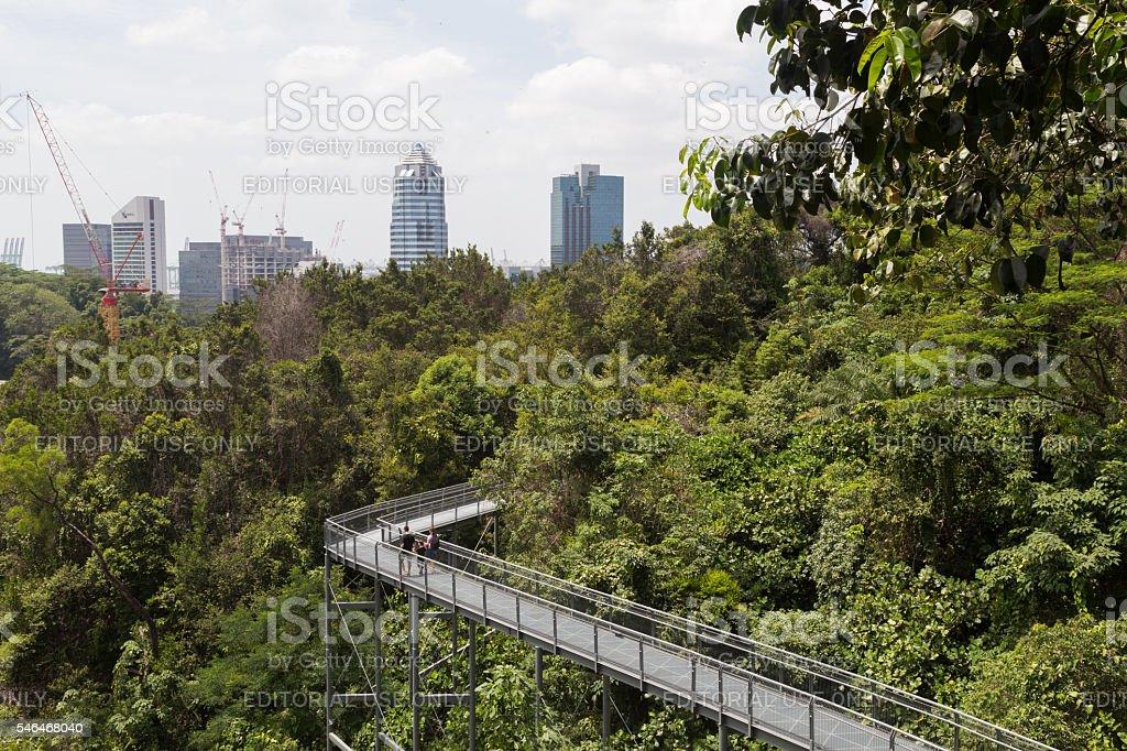 Southern Ridges Canopy Walk, Singapore stock photo