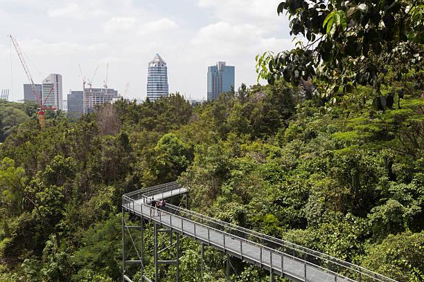 Southern Ridges Canopy Walk, Singapore - foto de stock