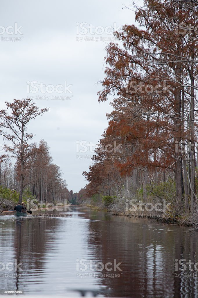 Southern swamp with trees stock photo